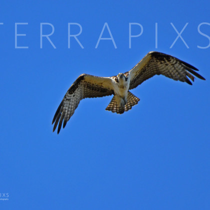 GUL148 Osprey-Palmetto Creek-Perdido Bay, AL