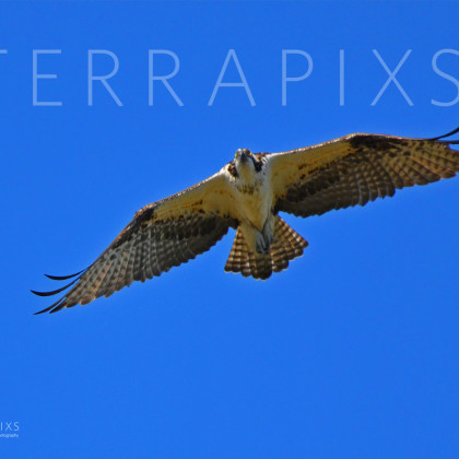 GUL149 Osprey-Palmetto Creek-Perdido Bay, AL