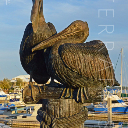 GUL205 Barber Marina-Orange Beach, AL-Brown Pelicans