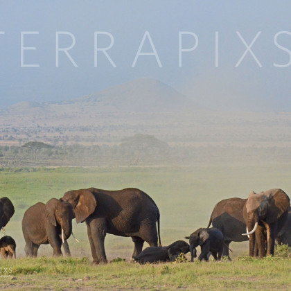 AFR330 African Elephants (dust bath day)-Amboseli Reserve, Kenya