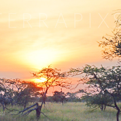 AFR618 Serengeti Bush Sunset-Serengeti National Park, Tanzania