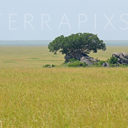 AFR633 Kopje (rock outcropping) In A Sea Of Grass-Serengeti National Park, Tanzania