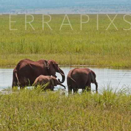 AFR401 African Elephants (water-the essence of life)-Tarangire National Park, Tanzania
