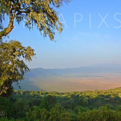 AFR310 First Light-Ngorongoro Crater Conservation Area, Tanzania