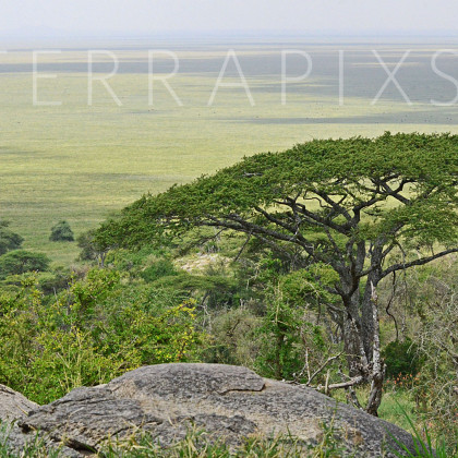 AFR600 The Plains of Serengeti-Serengeti National Park, Tanzania