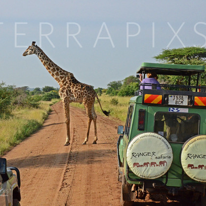 AFR659 Serengeti Traffic Jam-Serengeti National Park, Tanzania