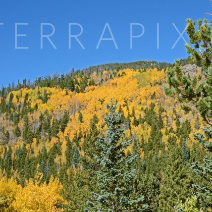 RMT 117-Aspen Gold-Rocky Mountain National Park, CO